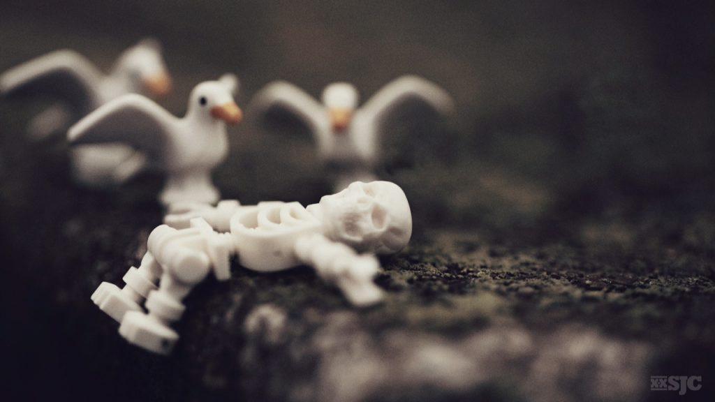 skeleton wtih seaguls