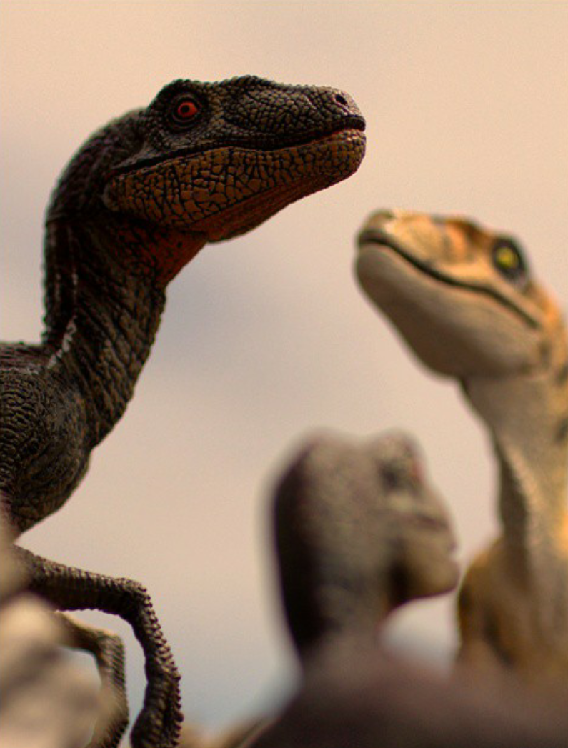 RaptorPack4