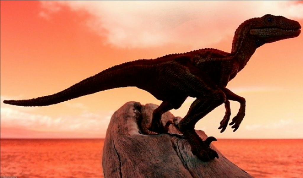 RaptorPack6
